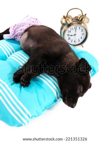 Puppy on a soft blue pillow isolated on white - stock photo