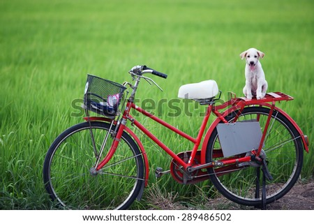puppy on classic bicycle with green background - stock photo
