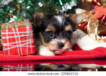 puppy  on the New Year's gifts - stock photo