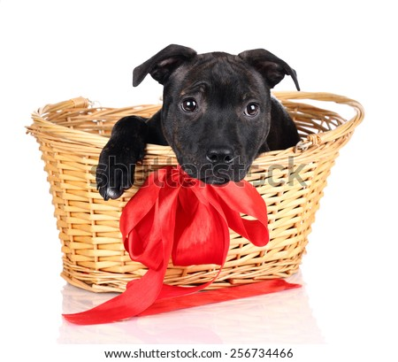 Puppy peeking out from the basket - stock photo