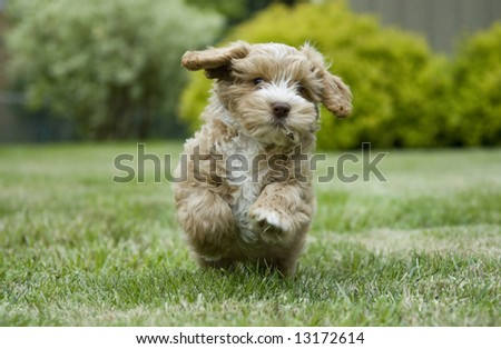 Puppy playing in a park - stock photo