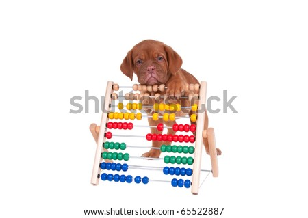 Puppy playing with abacus - stock photo