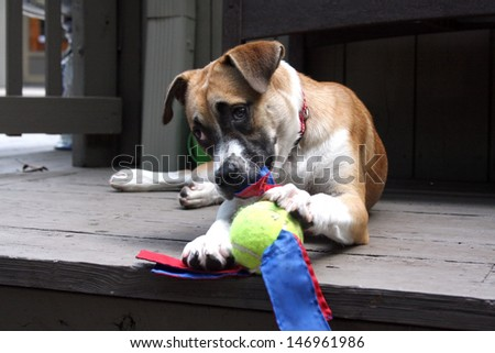 Puppy playing with her toy - stock photo