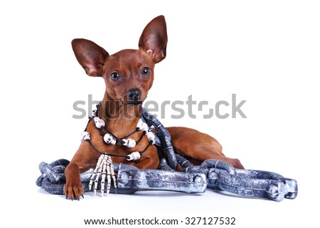 Puppy Russian toy, Halloween chains, necklaces, skull - stock photo
