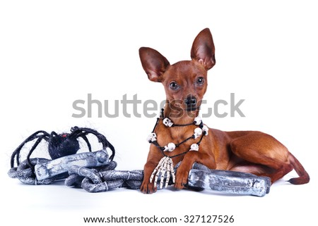 Puppy Russian toy, Halloween spider chains, necklaces, skull - stock photo