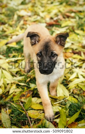Dog resting on grass outdoor portrait stock photo 209842408 shutterstock - Dogs for small spaces concept ...