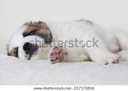 puppy sleeps - stock photo