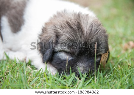 Puppy sleeps on the grass