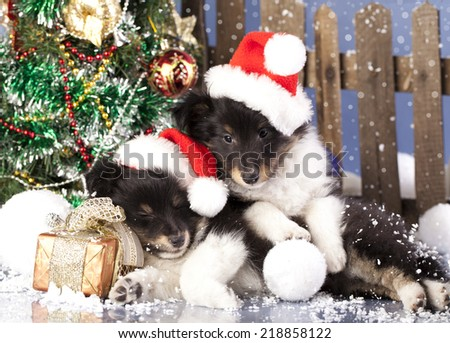 puppy sleeps on the New Year's gifts,   dog in  santa hat - stock photo