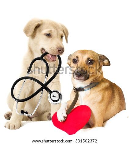 puppy vet - stock photo