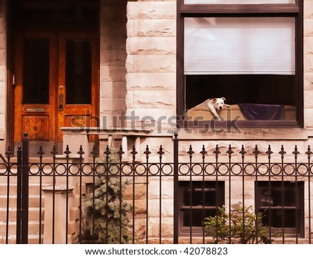 Puppy Waits For Owner of Chicago Bungalow - stock photo