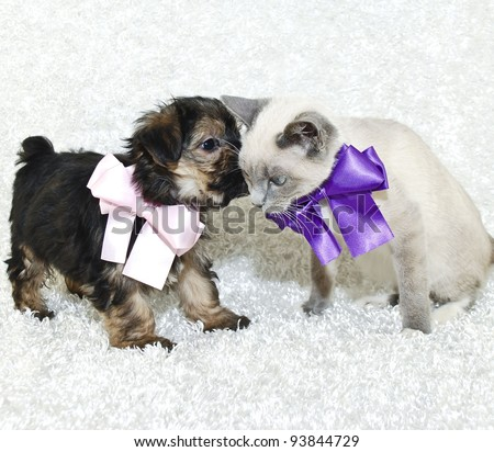 Puppy whispering in a kittens ear. Both wearing pretty bows on a white background. - stock photo