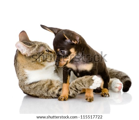 puppy with a cat look at each other. isolated on white background - stock photo