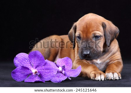 Puppy with a orchid flower - stock photo