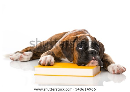 Puppy with book