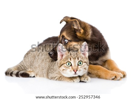 puppy with cat lying together. isolated on white background - stock photo