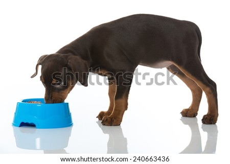 Puppy with food bowl - stock photo