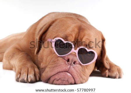 Puppy with heart shaped pink framed sun glasses isolated