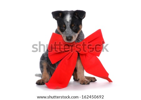 puppy with red bow isolated on white background - stock photo