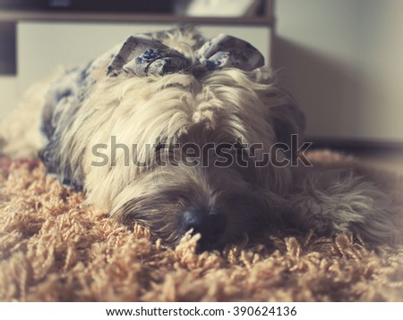 Puppy with ribbon. Dog vintage background  - stock photo