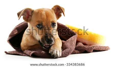 Puppy wrapped in towel isolated on white