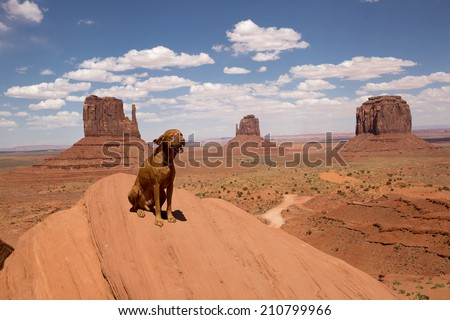pure breed vizsla dog sitting at the rim of Monument Valley  - stock photo