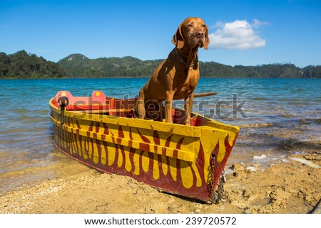 pure breed vizsla dog standing in a fishing boat  - stock photo