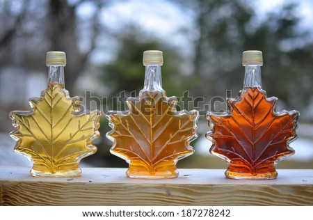 Pure Nova Scotia Maple Syrup made from backyard maple trees.  Lightest bottle is early season, dark bottle is late season syrup. - stock photo