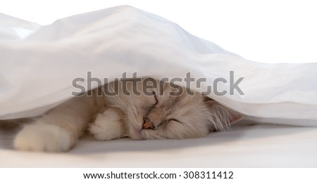 Pure white cat sleeping in bed - stock photo