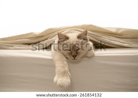 Pure white cat sleeping on white bedding - stock photo