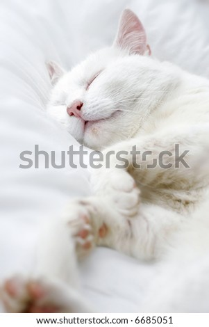 Pure white cat sleeping on white bedding - stock photo
