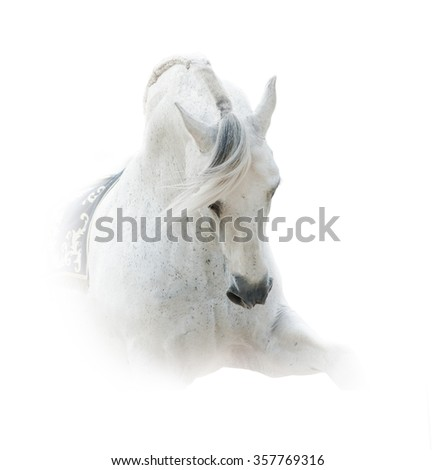 Pure white spanish stallion over a white background