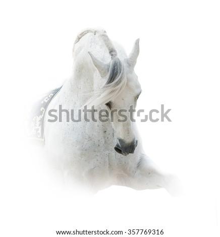 Pure white spanish stallion over a white background  - stock photo