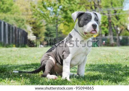 Purebred Canine Puppy sitting on grass on sunny day