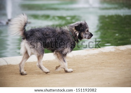 Purebred puppy alone on the street  - stock photo