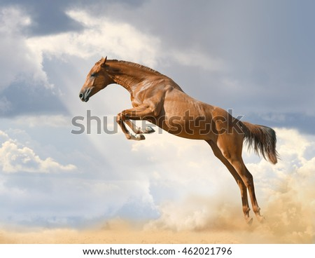 purebred young horse jumping on nature