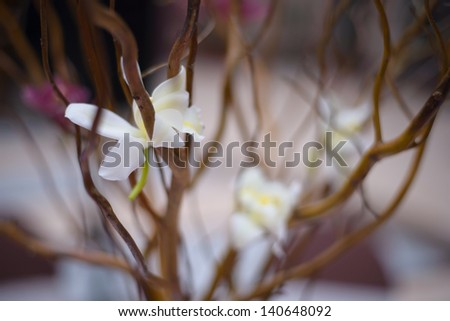 Purple and white flower decoration - stock photo
