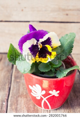 Purple and Yellow Pansies in pot