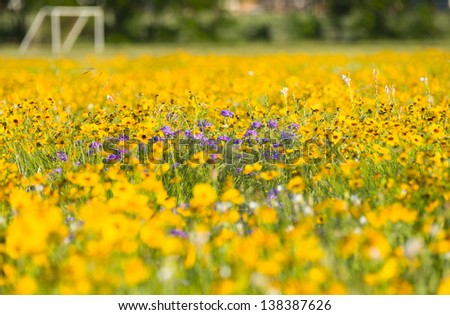 Purple and yellow sunflowers at the front edge of a soccer field and goal posts - stock photo