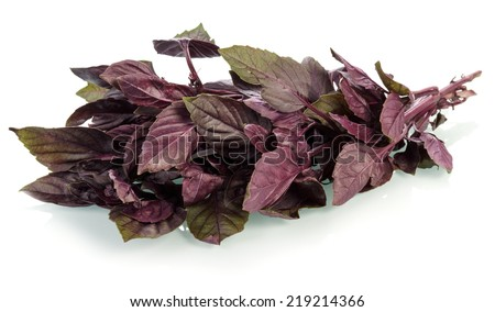 Purple basil leaves isolated on white background - stock photo