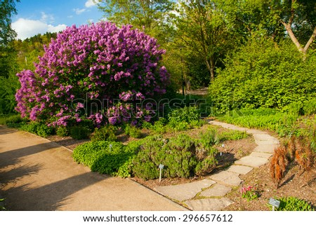 Purple bush in Prague Botanical garden Troja - stock photo