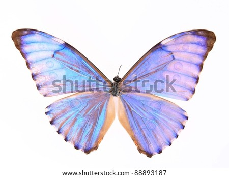 Purple butterfly isolated on a white background - stock photo