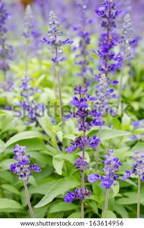 Purple flower closeup. - stock photo