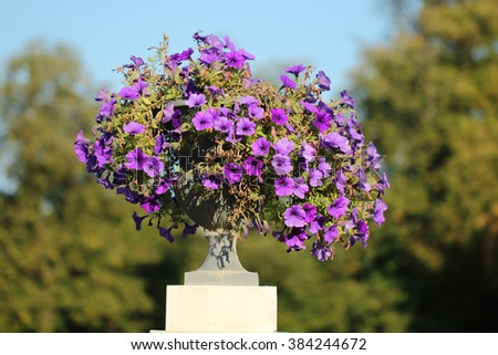 Purple flower in a flowerpot