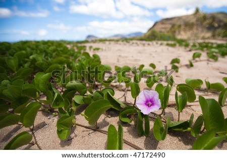 Purple flower in sand - stock photo
