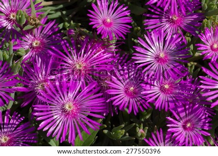 purple flower in spring time - stock photo