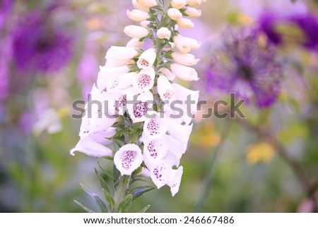 Purple flower, isolated in a garden - stock photo