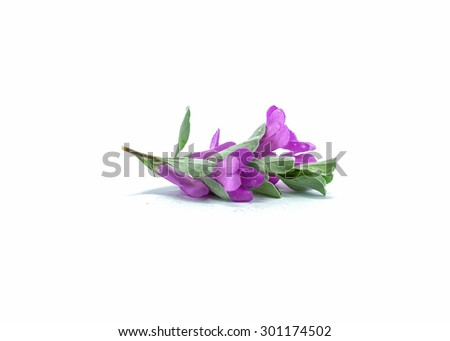 Purple flower isolated on white background - stock photo