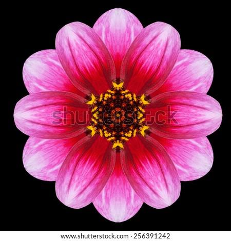 Purple Flower Mandala. Kaleidoscopic design Isolated on Black Background. Mirrored pattern - stock photo