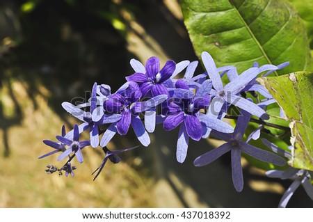 Purple flower with sunlight in garden - stock photo